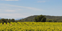 Vignoble-saint-romain-lavinia